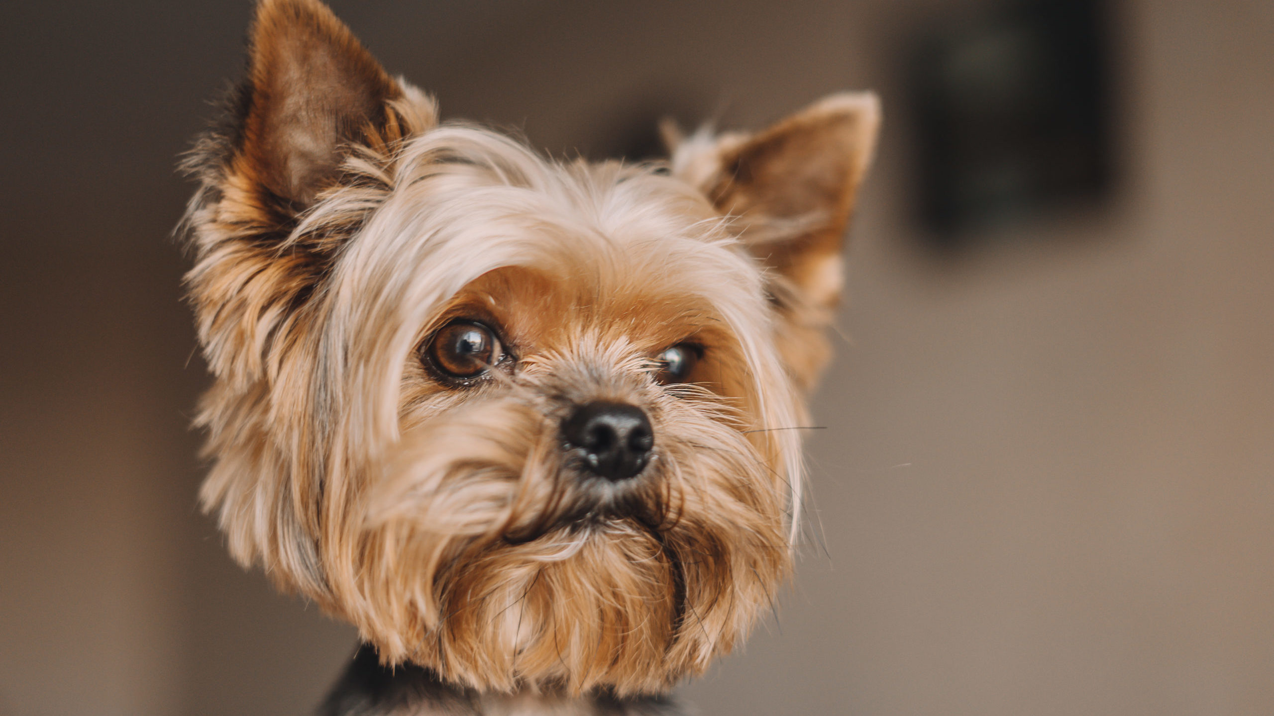 Smallest Dog Breeds In The World